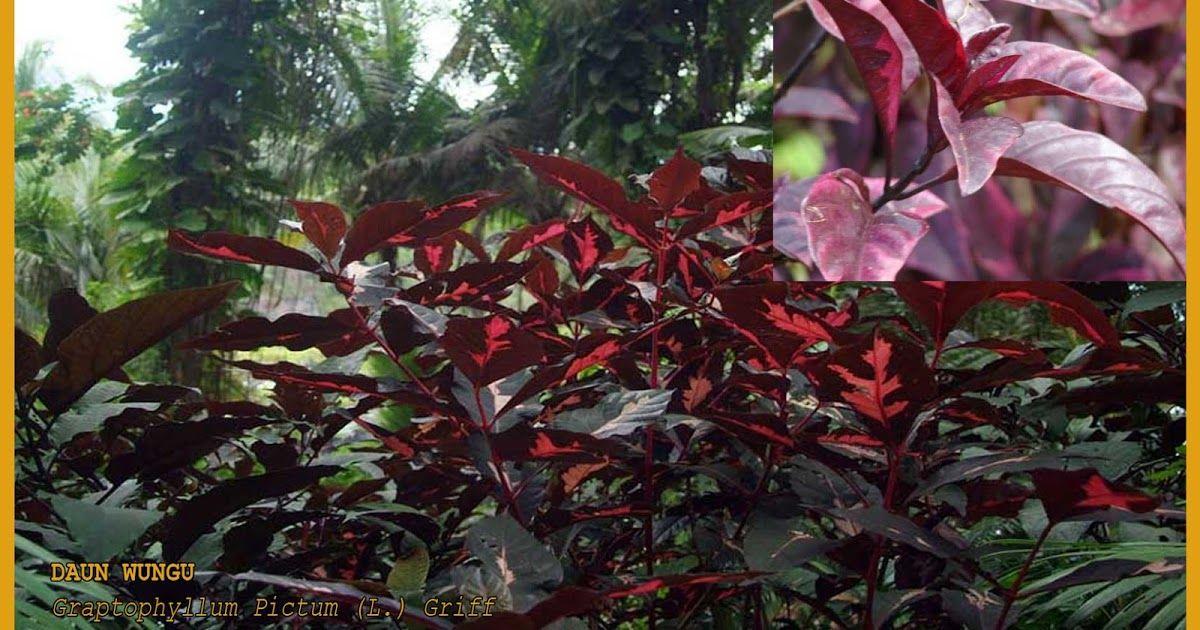 Pin Di Health Leaf