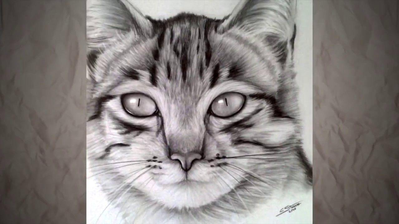 Comment dessiner un chat , Speed drawing , Dessin réaliste
