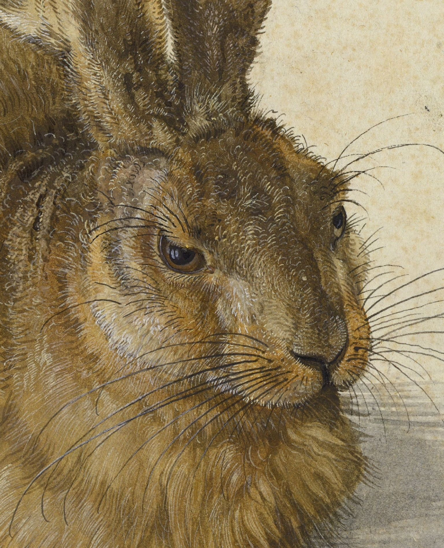 """8/""""x10/""""  Fine Art Print Real Canvas Albrecht Durer Young Hare Painting"""