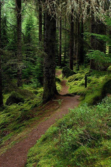 Forest Facts Forest Landscape Forest Path Landscape
