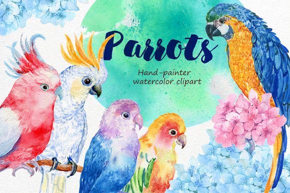 6 birds parrots watercolor by MitrushovaArt on @creativemarket