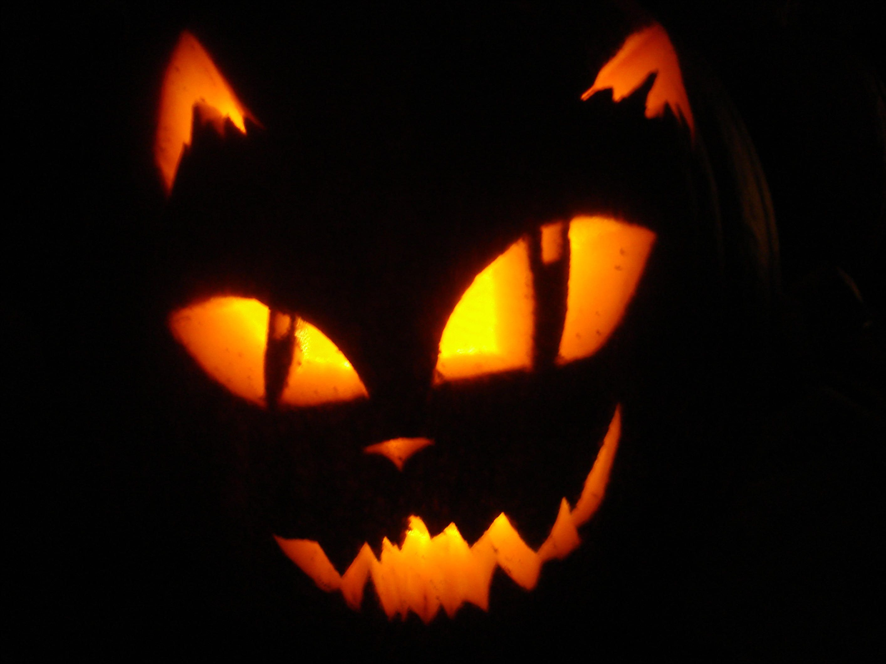 20++ Halloween pumpkin cat carving ideas in 2021