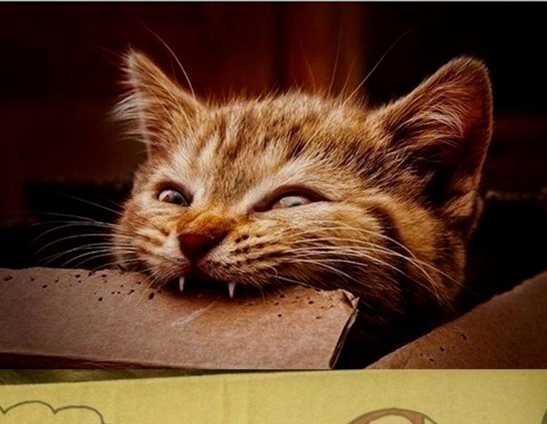 Pin By Angelika Riedl On Tiere Cat Biting Cats Cat Attack
