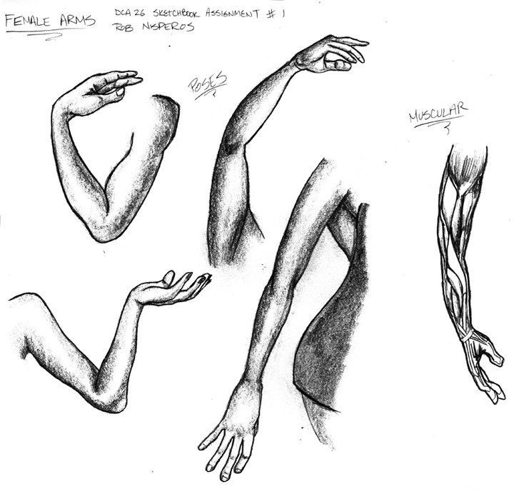 drawing tips for female arms art pinterest arms drawings and