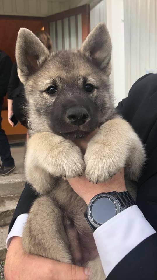 Top 10 Most Loyal Dog Breeds