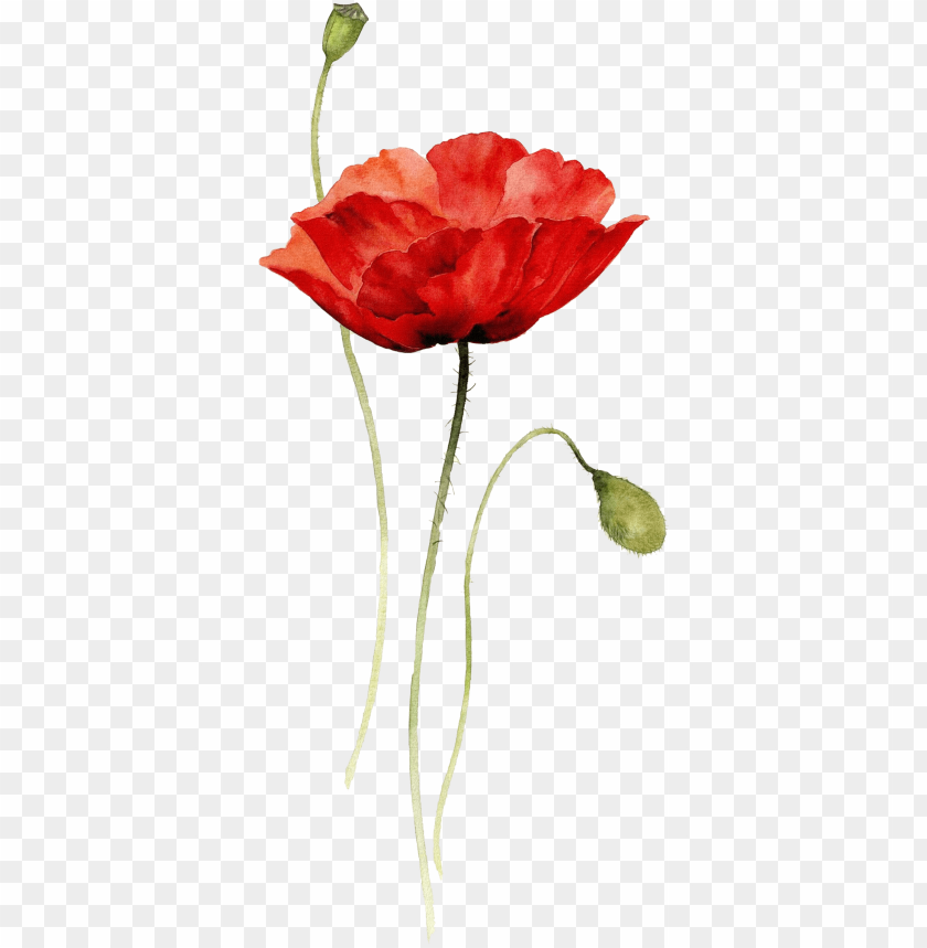 Red Poppy Watercolor Tattoo Png Image With Transparent Background Png Free Png Images Red Poppy Tattoo Poppy Tattoo Small Watercolor Poppy Tattoo