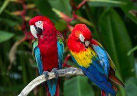 tropical rainforest biome info