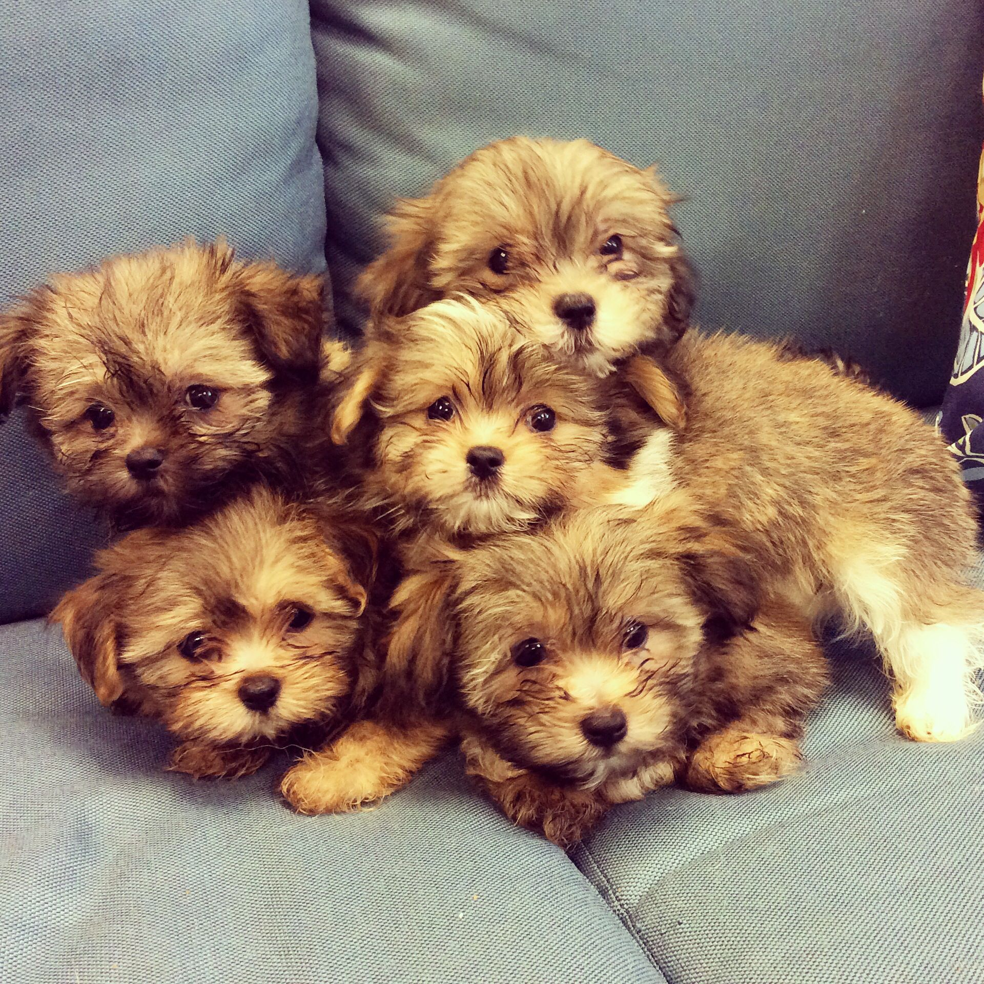 MiKi puppies Cute animals, Puppies, Big dogs