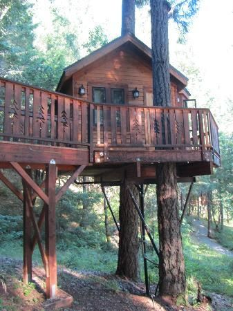tree houses for adults | Vertical Horizons Treehouse Paradise (Cave Junction) - Hotel reviews ...