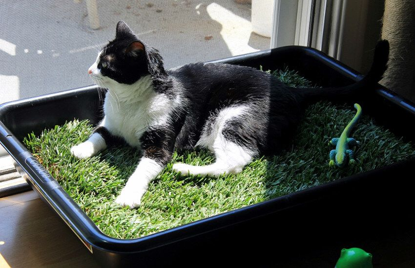 How To Make An Indoor Grass Lounge For Your Cat Indoor Cat Cat Tent Diy Cat Tent