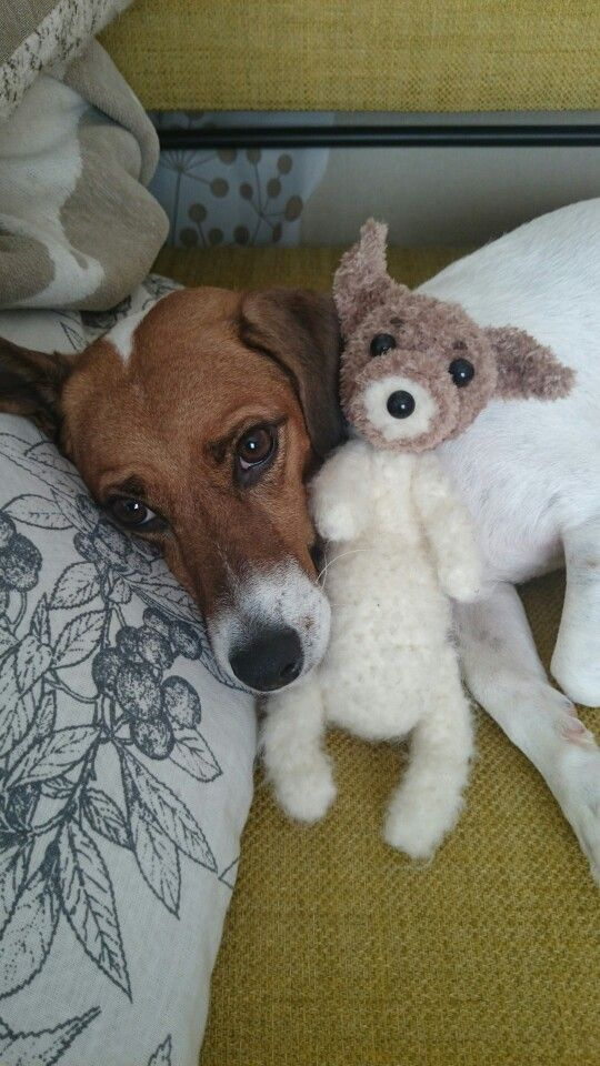 Jack Russell Terrier With His Toy They Love Their Toys Don T
