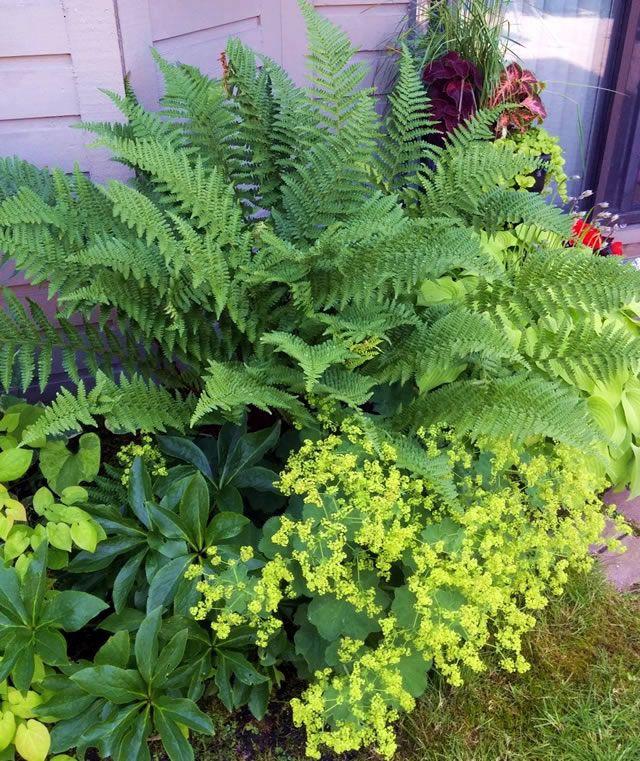 Part 1: A Garden Makeover in BC | Fine Gardening