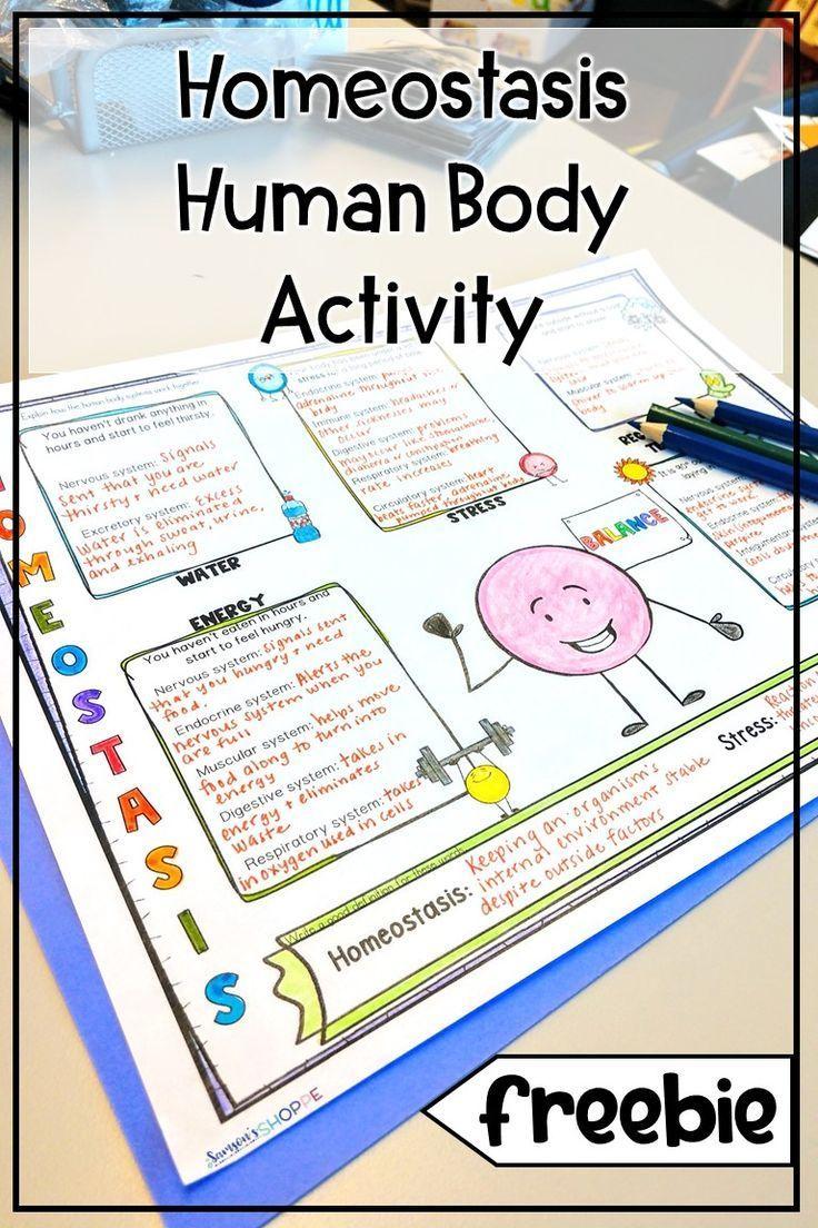 Homeostasis Free Human Body Worksheets and Sketch Note Graphic Organizers,  Homeostasis Free Human