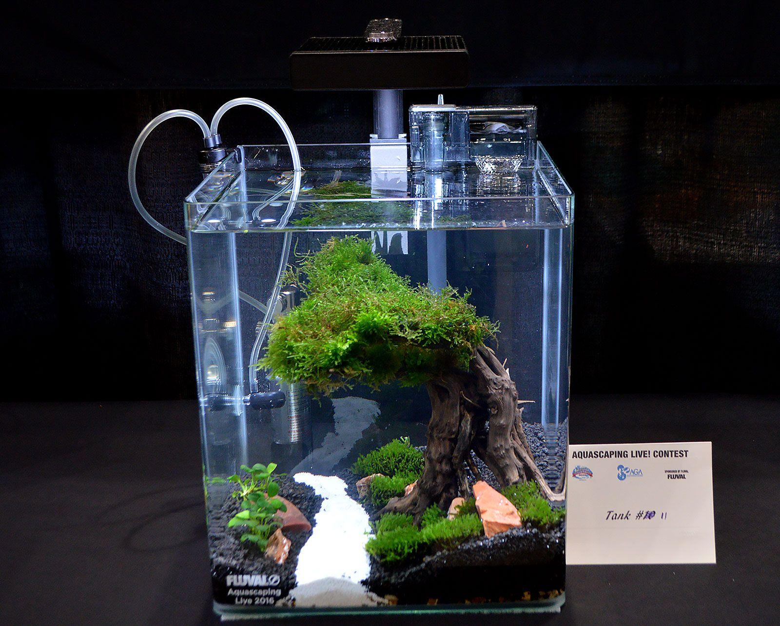Aga Aquascaping Live 2016 Small Tank Entry 11 Aquascape Fish Tank Plants Betta Fish Care