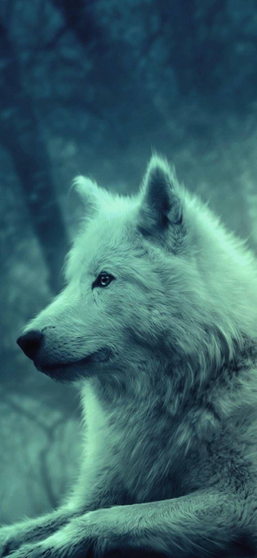 White Wolf In 2021 Wolf Wallpaper Wild Animal Wallpaper Wolf Canvas