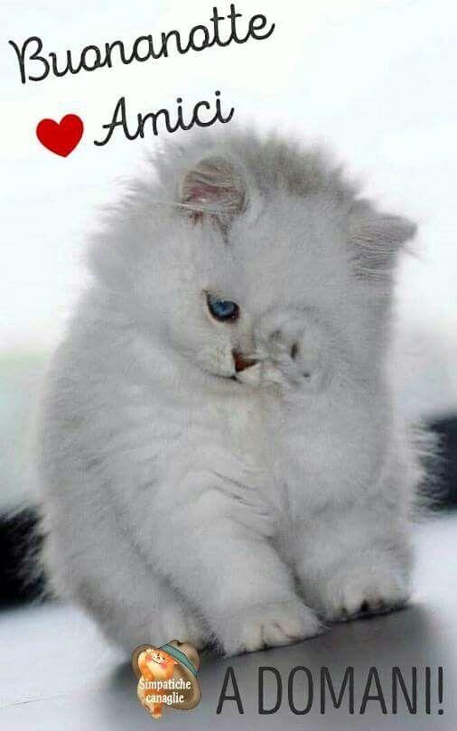 Buonanotte animazione pinterest gatti cuccioli e micio for Buongiorno assonnato