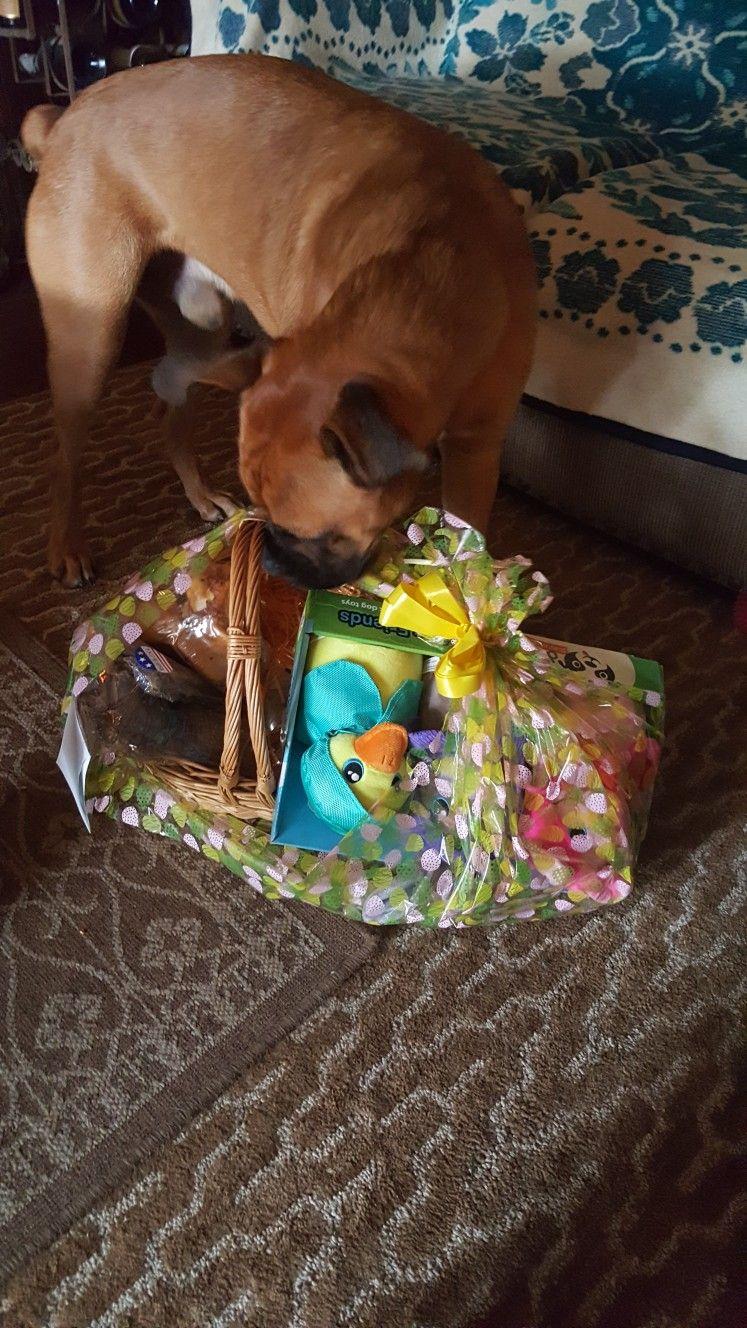Pin By Sonika Van Zyl On Doggies Boxer Dogs