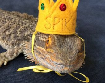 2432ec2c0dc7ca TOP HATS for your Bearded Dragon, Snakes, & Small Pets! Two sizes ...