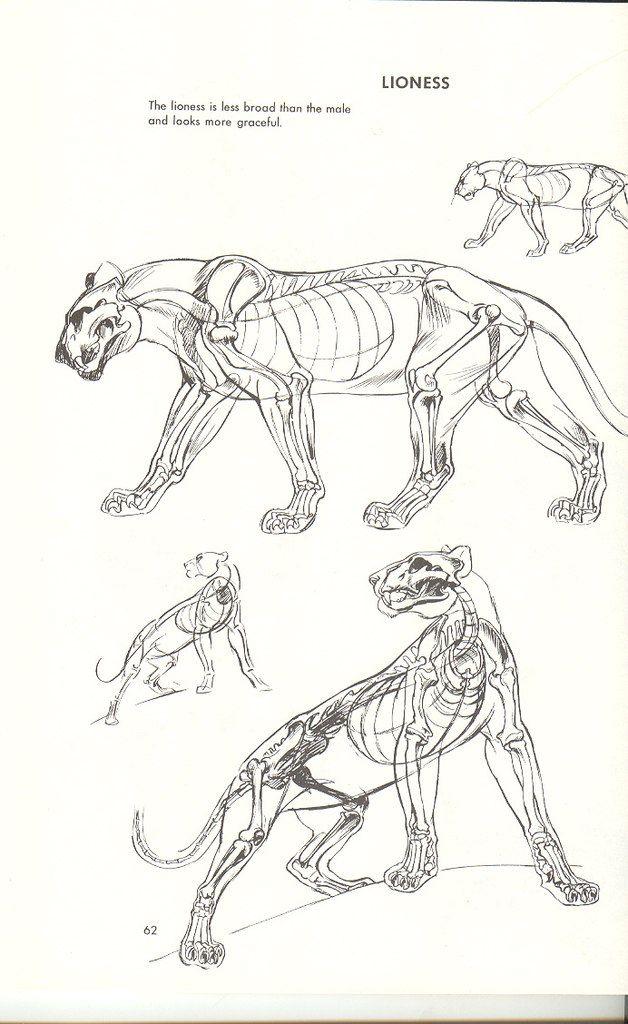 Pin By Maddie Brown On Animal Anatomy Pinterest Animal Anatomy