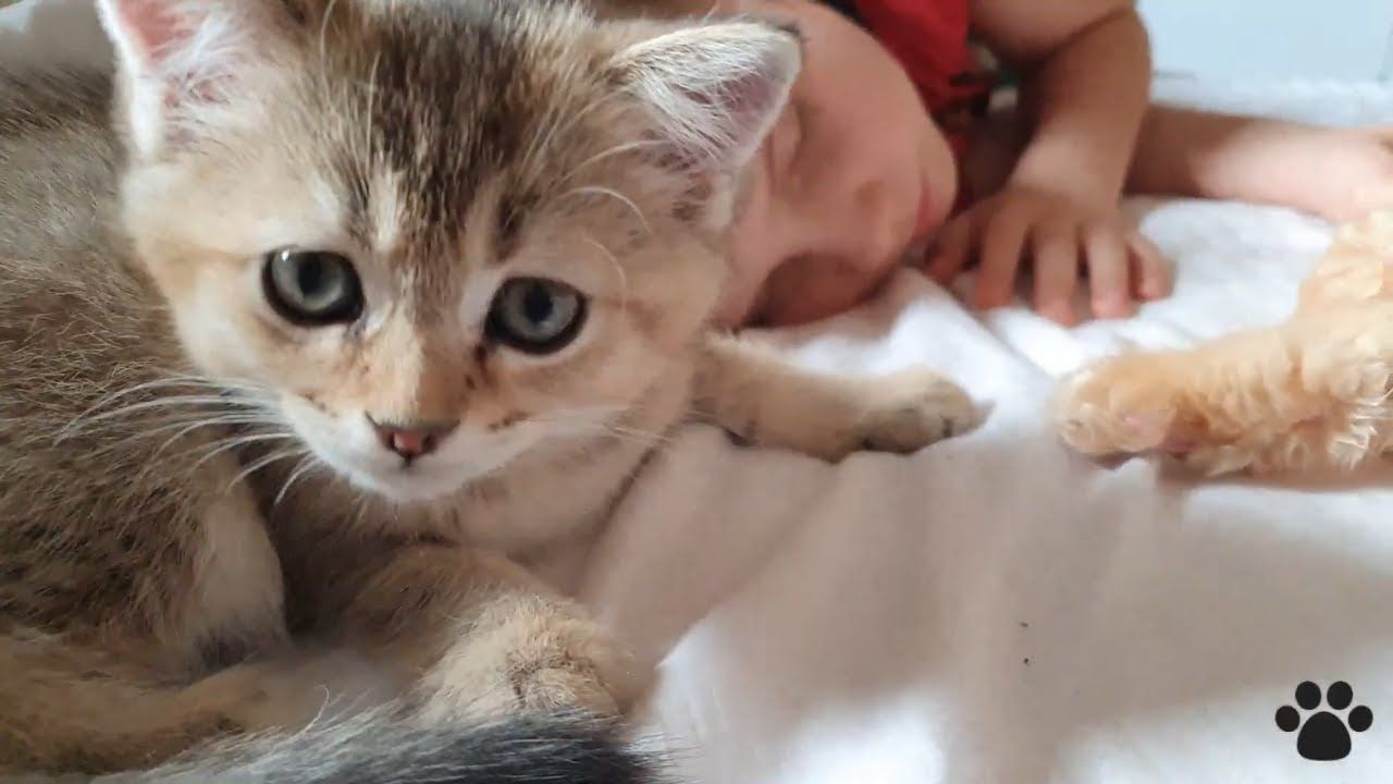 Morning with 4 cats | Cute kittens