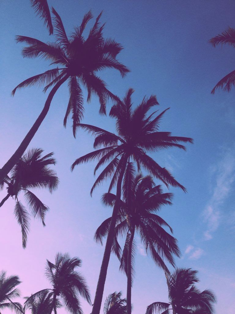 Vsco Beach California Wallpaper Palm Trees Wallpaper Summer Wallpaper