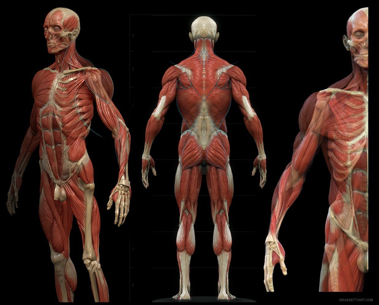 Design and Anatomy Package – rgrassetti.com | anatomy | Pinterest ...
