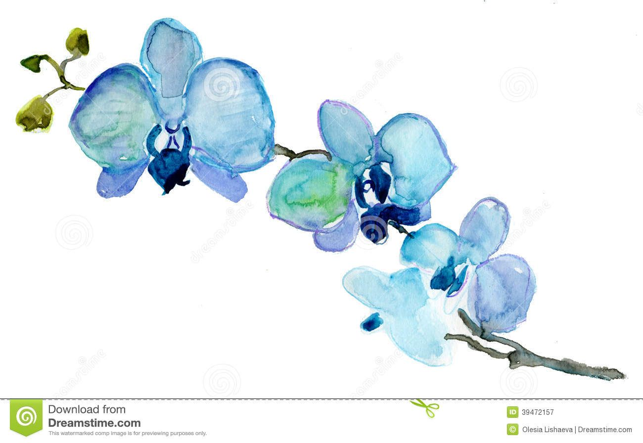 Orchid Watercolor Tattoo Buscar Con Google Blue Orchid Flower