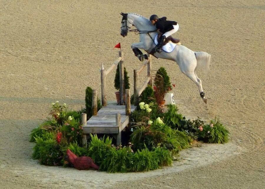 Looking at this horse you know it loves to jump!