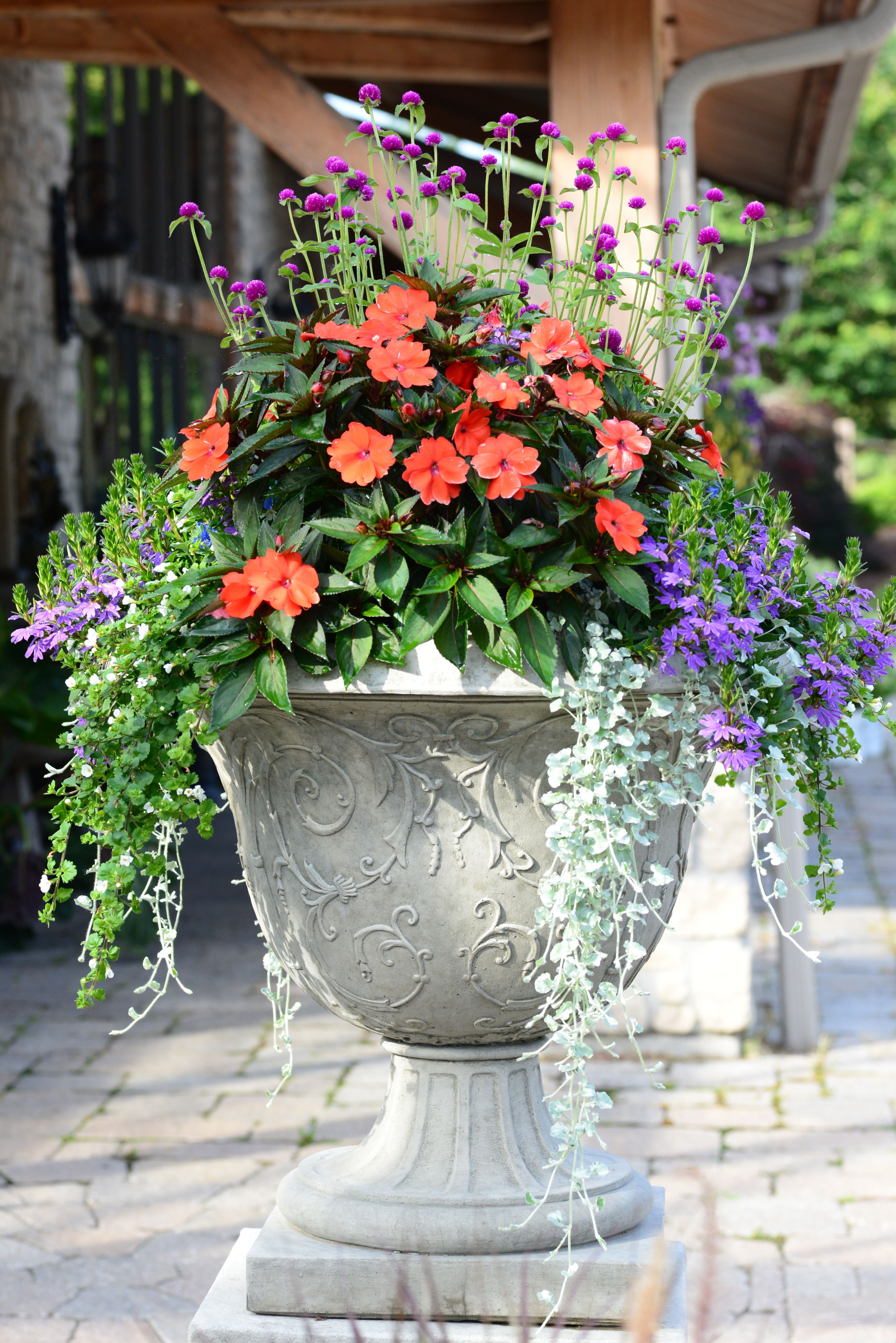 Ornate concrete mixed planter Mixed flower pots, Garden