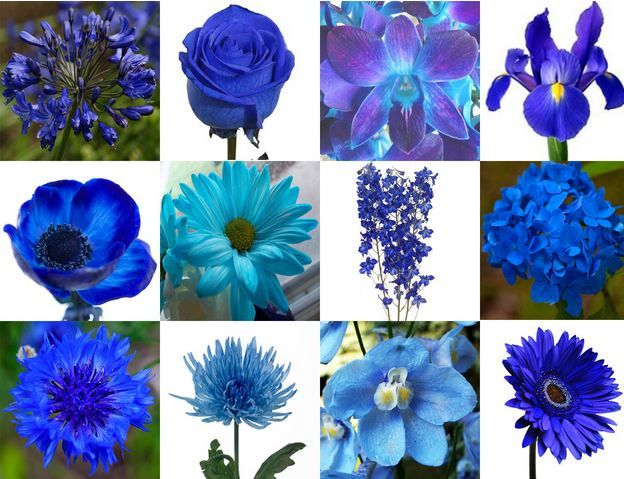 Blue Flowers Wedding Add Pic Source On Comment And We Will Update It