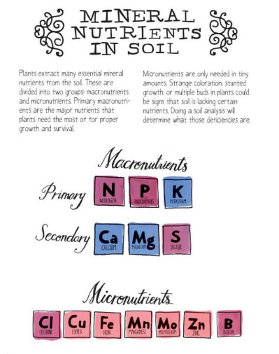 Macro and micro mineral nutrients in soil kids for Minerals in dirt