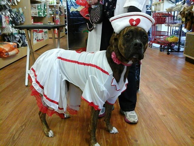 Boxer Dog Nurse Costume Boxer Dogs Boxer Costumes Dog Costumes