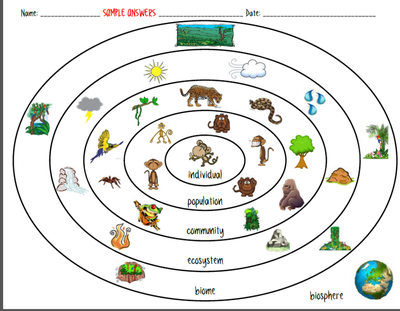 Ecosystem Organization Levels Of The Environment Biotic Vs
