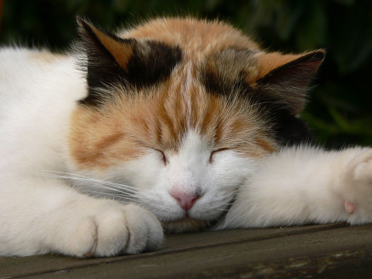 5 Tips for Getting a Better Night's Sleep Pretty cats
