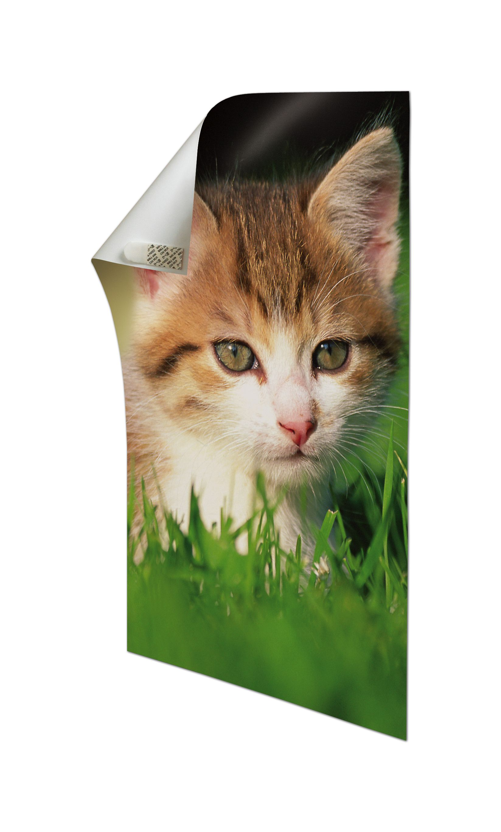Yes It S A Cat But It S A Really Cool Cat Staring At You From The Wall Thanks To Command R Poster Hanging S Hanging Posters Command Strips Decorative Hooks