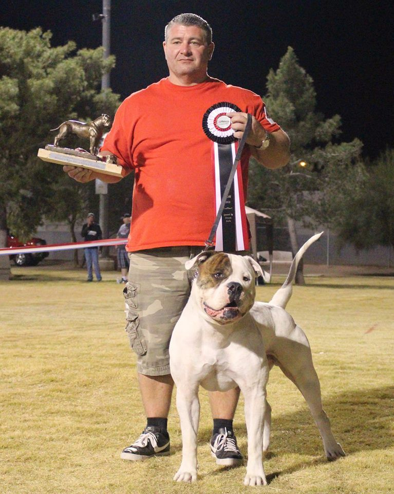 Pin By Bybees American Bulldogs On Bybees American Bulldogs