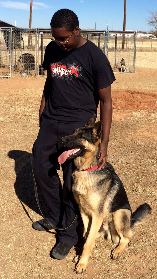 Rescue German shepherd in Abilene, TX. VanBuren shepherds