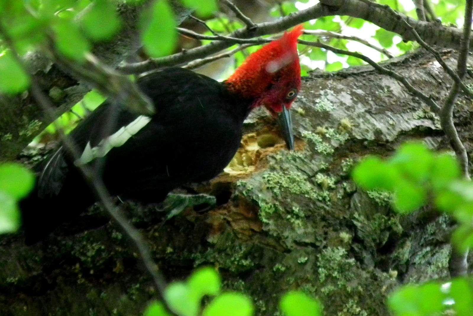 Moderno Temporada De Pájaros Enojados Para Colorear Ornamento ...