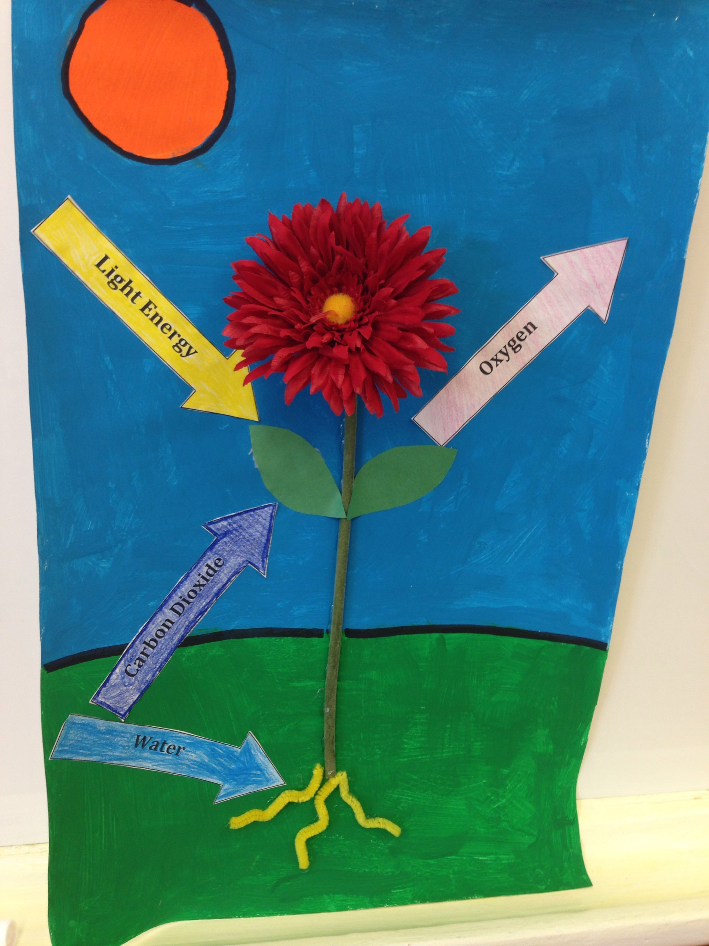Flower Photosynthesis Craft Paint An Outdoor Scene Onto White Poster Paper Hot Glue A Fake Photosynthesis Activities Photosynthesis Projects Photosynthesis [ 3264 x 2448 Pixel ]