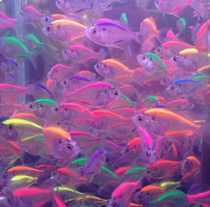Amazing see through glow in the dark fish these are real for Fish and more pet store
