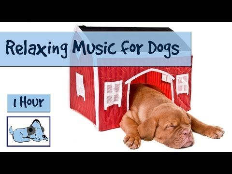 Sleep Music for Dogs and Puppies - Get Your Dog to Drift Off