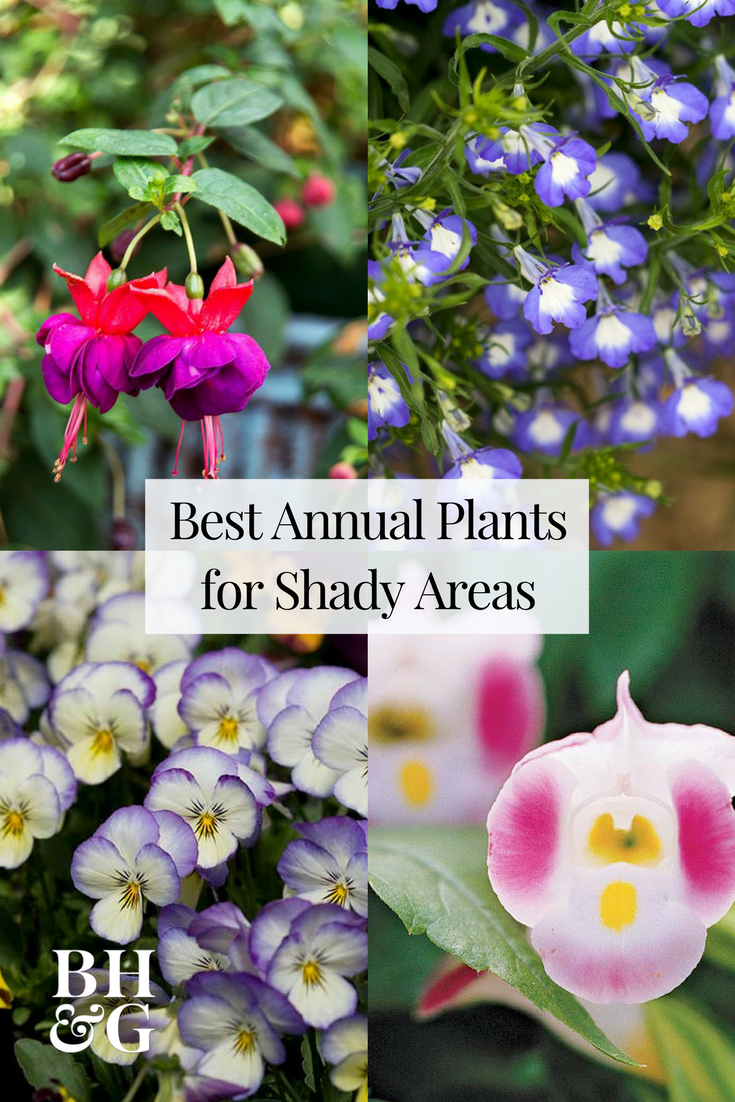 12 Gorgeous Annuals That Thrive In The Shade Shade Loving