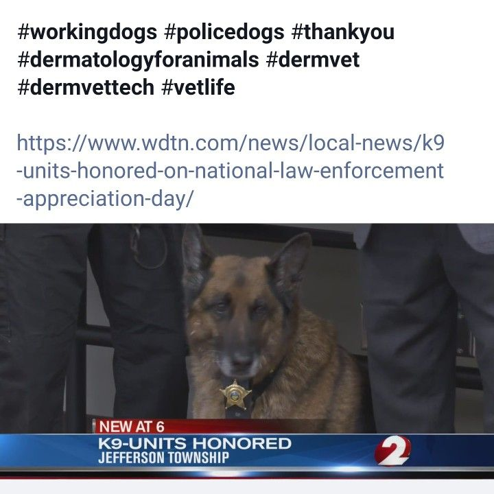 A big thank you to the working dogs! �️��