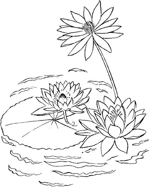Lily Pad Printable Coloring Pages Enjoy Coloring Kids Art Lilies Drawing Water Lily Drawing Coloring Pages