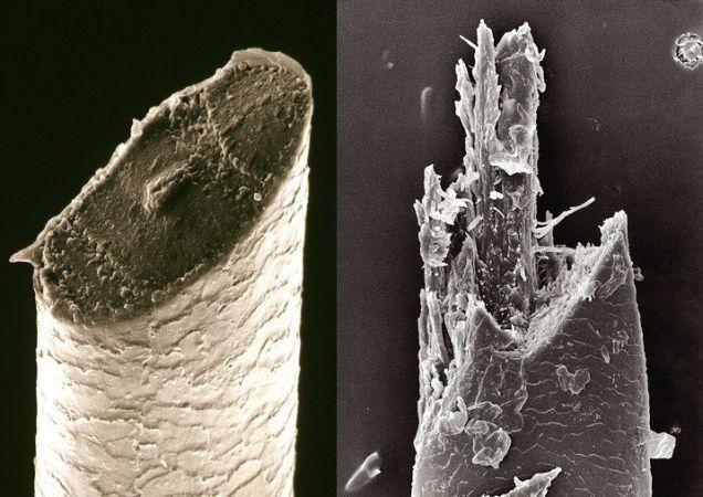 Pelo De Barba Al Microscopio Cortado Con Navaja Izq Y Con