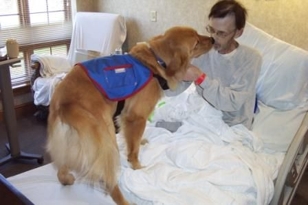 Pin On Assistance Dogs For Achieving Independence