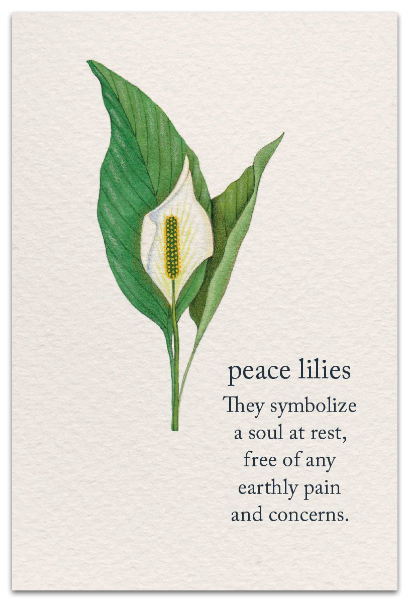Pin by Mary Oracle on Flowers (With images) Flower