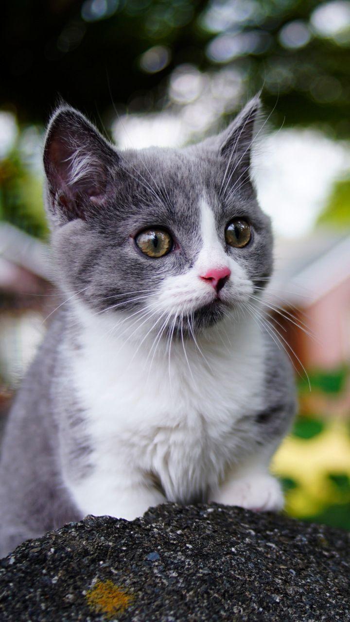Cute, baby animal, kitten, feline, 720x1280 wallpaper ...