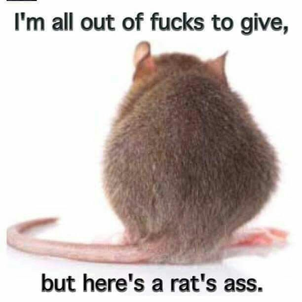 I'm all out of fucks to give,but here is a rats ass to give.