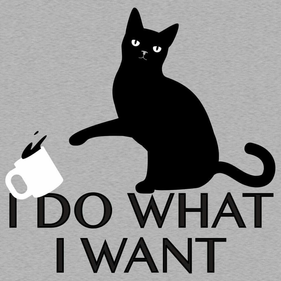 World Domination For Cats Art Print by Tobe Fonseca … | Pinteres…